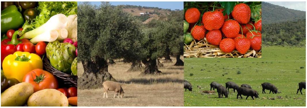 estrategia ecologica España