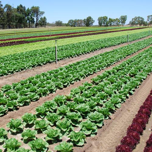 depuracion-de-aguas-residuales-industriales-en-la-industria-hortofruticola-hortalizas-frutas-y-legumbres