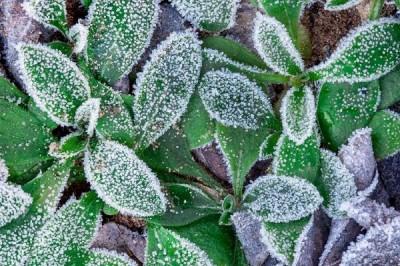 img plantas para clima frio 39785 600 e1479210171541