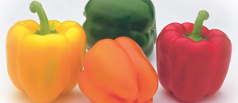 pimiento 4colores