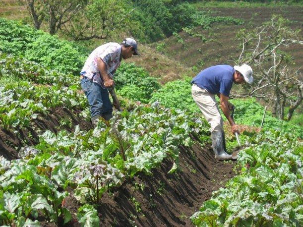florida inmigrantes latinos agricultores immokalee