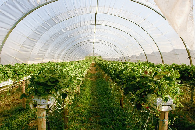 greenhouse 2096497 640
