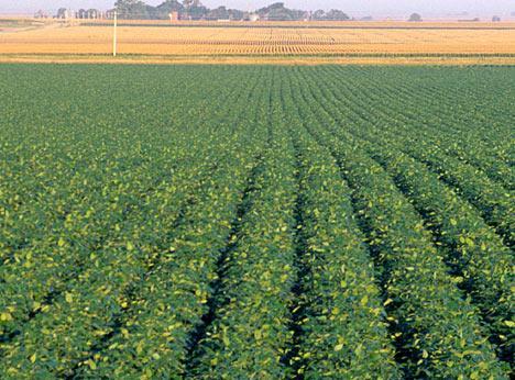1996 Biotech crops