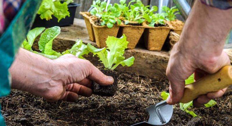 Jardineria cultivoorganico2