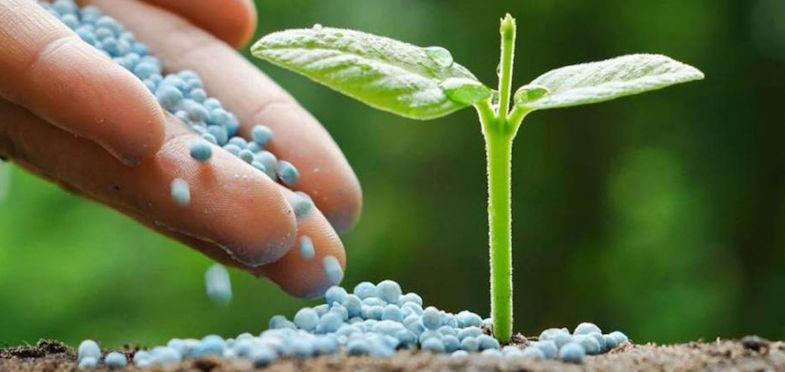 planta abono 785